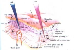 Giúp bạn phân biệt nám da và tàn nhang
