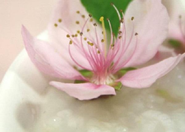 cách làm đẹp da bằng mật ong và hoa đào