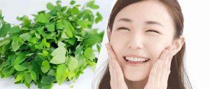 Trị tàn nhang bằng rau ngót – thực hiện đơn giản, hiệu quả bất ngờ!